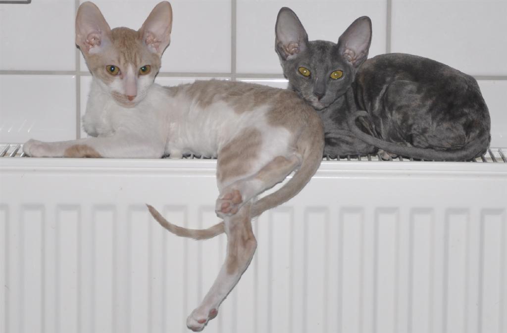 katt-element