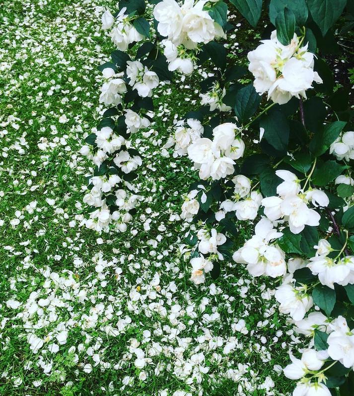 Bild från Instagram Haspet