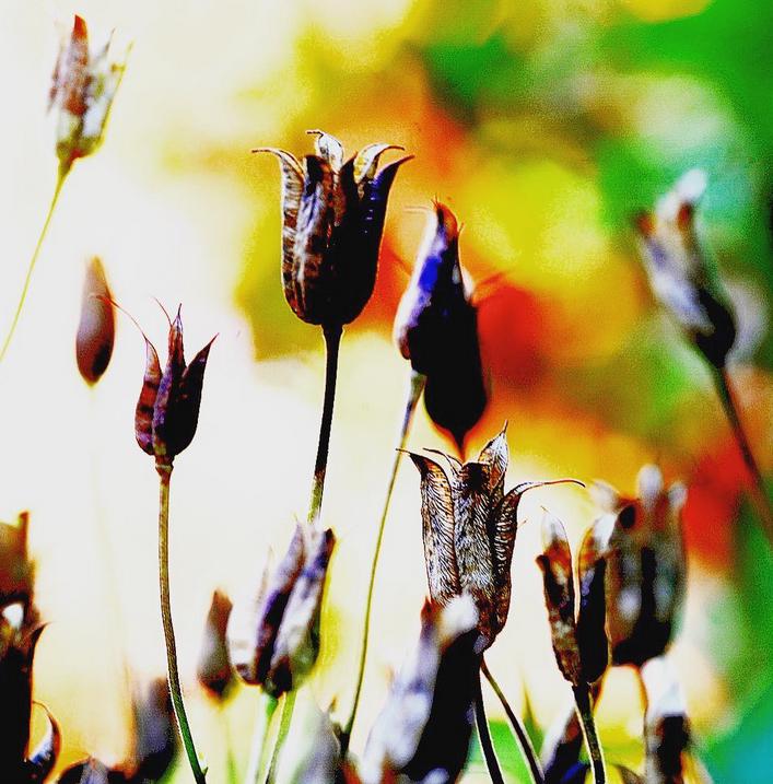 Bild från Instagram hannusbilder,  Seeds