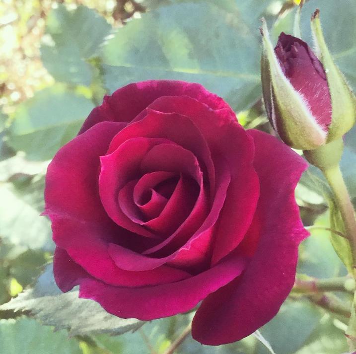 Foto från Instagram skona_grona_aventyr,  Good morning