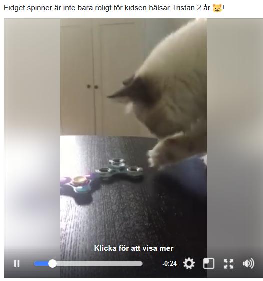 Katt gillar Fidget spinner