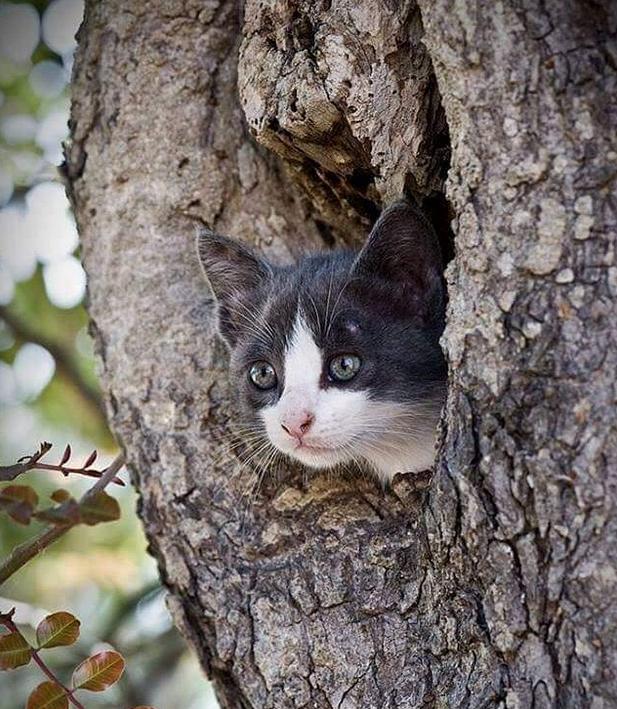 katt träd