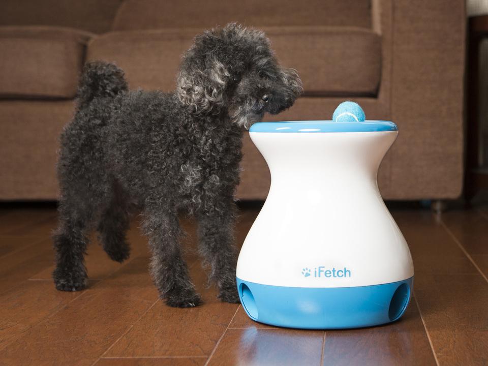 Rolig julklapp till hunden som den inte blir fet av ;)