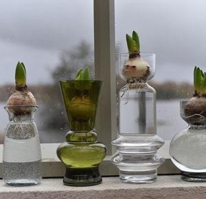 hyacinter
