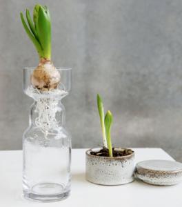 hyacint vas