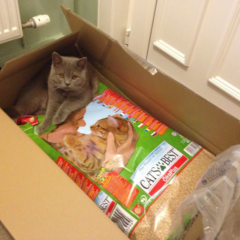 Så trivs katten på kattlådan