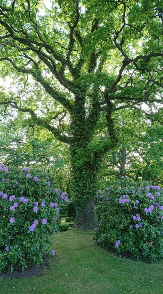 Trolskt vackert träd