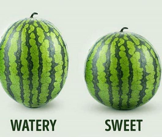 Välja rätt melon! Välj en rund så får du en sötare!
