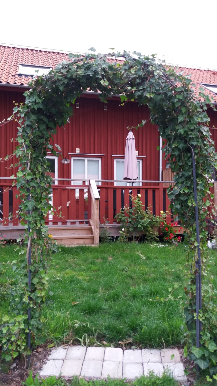 Portal med murgröna
