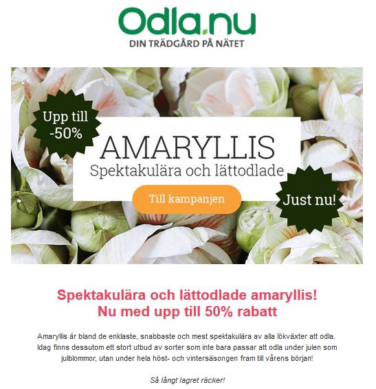 Nu är det tid att att planera och plantera Amaryllis