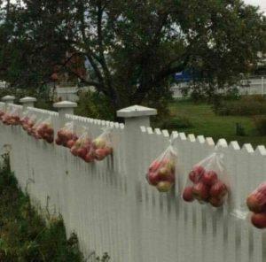 ge bort frukt i påsar på grinden