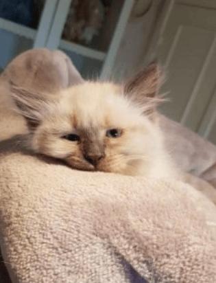 måndag katt