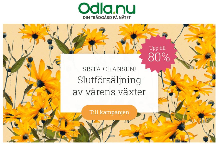 Fynda på Odla.nu! Slututförsäljning av vårens växter!