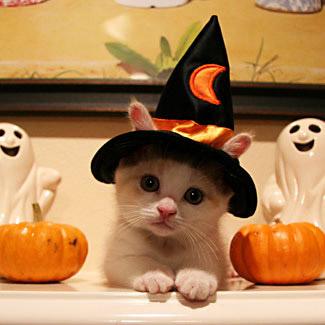 halloween katt