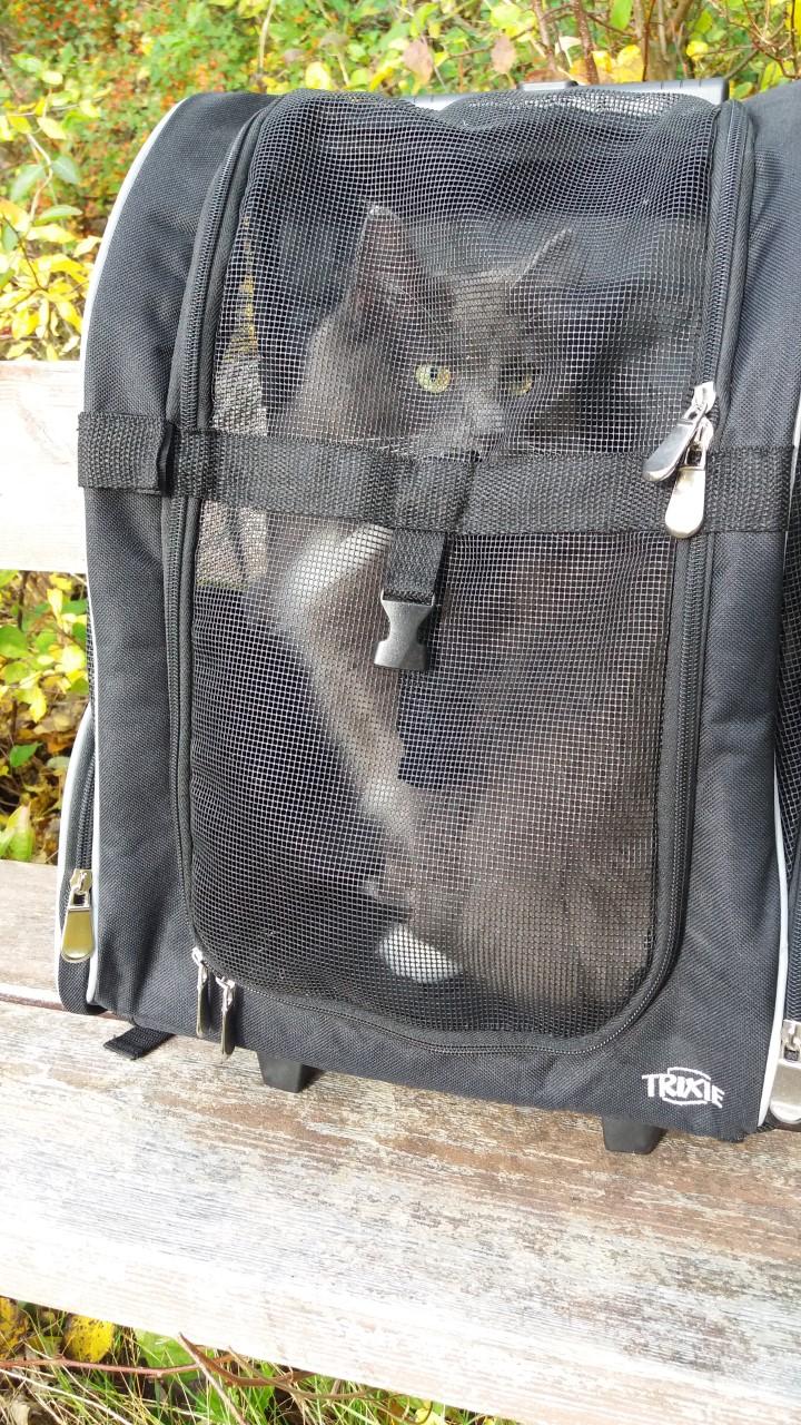 Ta med katten ut i en transportryggsäck