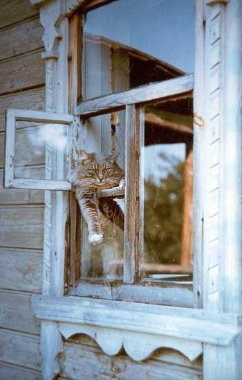 katt fönster