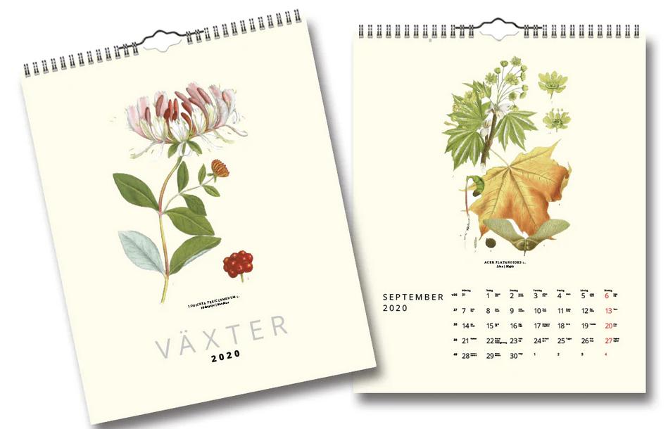 Vacker och stilren väggkalender med målade växter