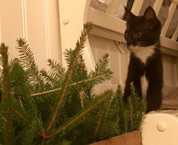 katt gran