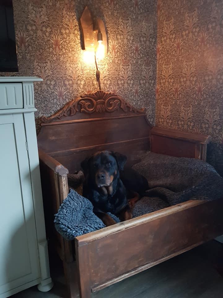 Hundbädd av gammal antik utdragbar säng