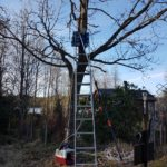 Få ned katt från träd