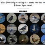 Vilka fåglar känner du igen?