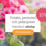Rabattkod idag på pelargoner, sättpotatis och perenner