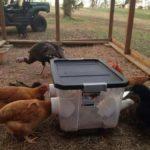 Tillverka utfodringslåda till höns