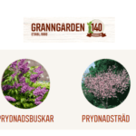 Stort utbud av prydnads träd och buskar på Granngården